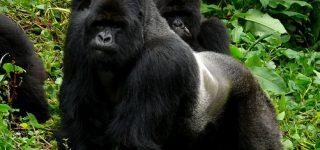 3 Days Gorilla trekking, Lake Kivu and Culture tour