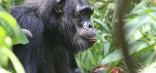 4 Days Explore Rwanda Tour