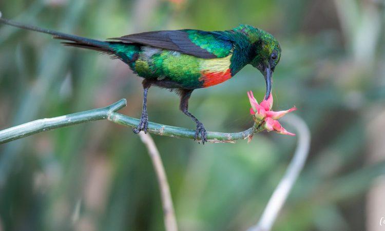 Bird Watching in Nyungwe