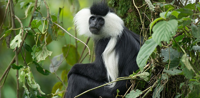 Flora & Fauna in Nyungwe