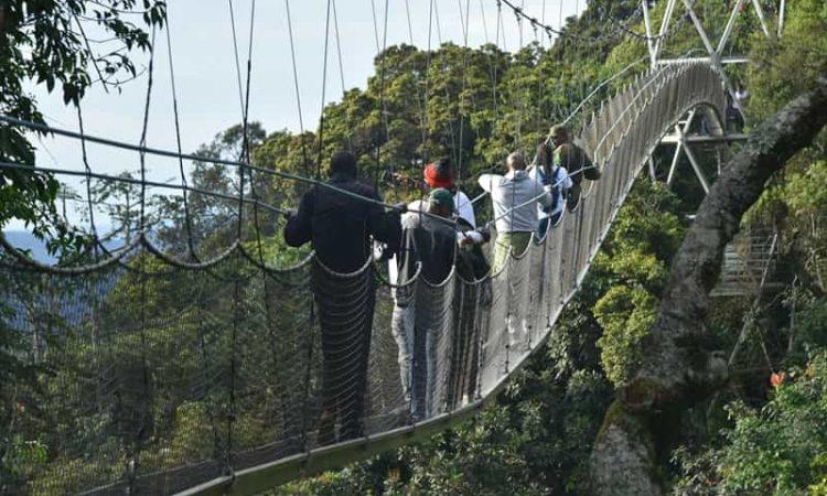 Activities in Nyungwe