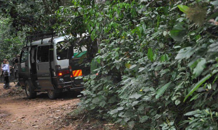 Nyungwe National Park Safari