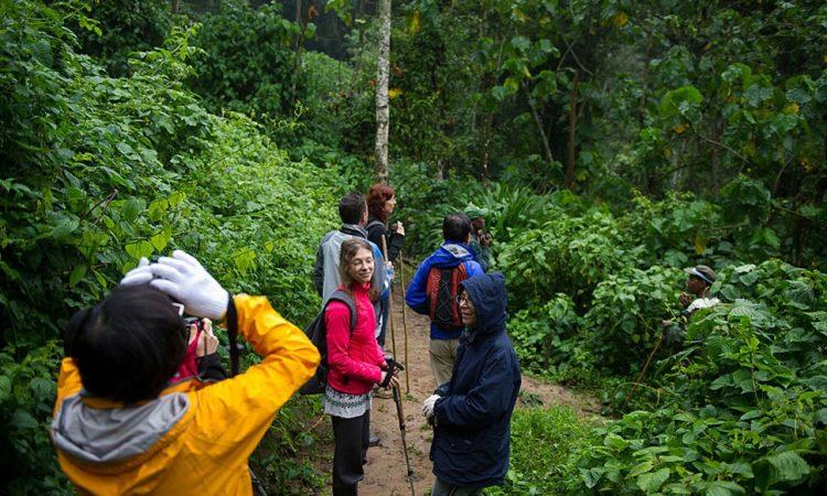 Birding Trails in Nyungwe