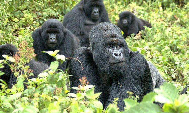 7 Days Uganda and Rwanda Tour