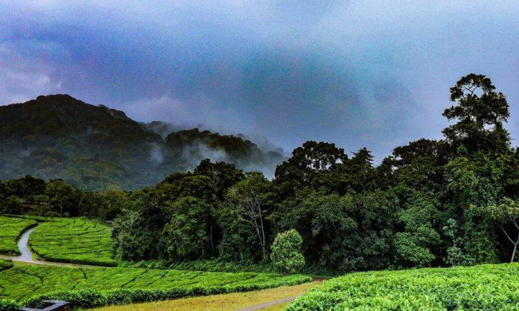 Cyamudongo Forest