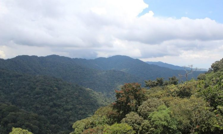13 Facts About Nyungwe National Park