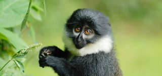 The 13 Primates in Nyungwe
