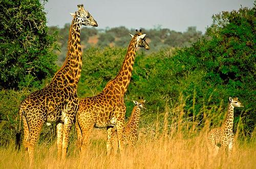 Akagera-National-Park
