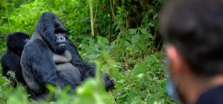 Comparison Between Gorilla Trekking and Gorilla Habituation