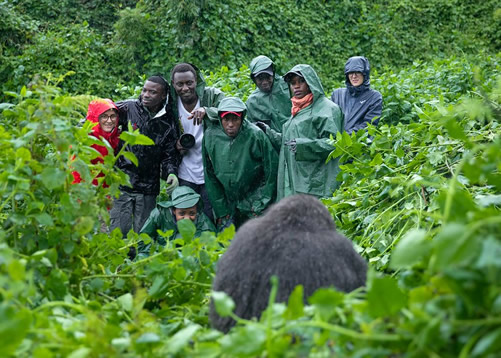 Top 8 Activities in Bwindi Impenetrable Forest