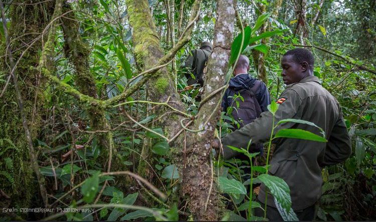 Hiking Trails in Bwindi Impenetrable National Park