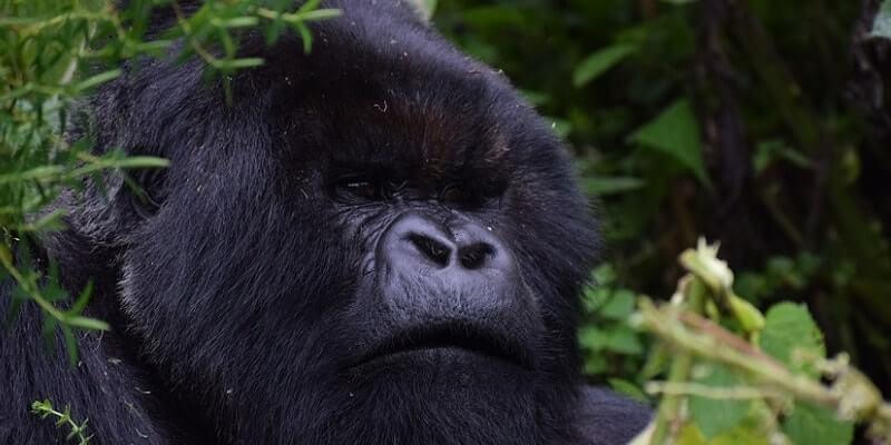 Rwanda Gorilla Trekking Best Time to Go