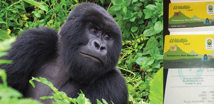 Travel Documents Required for Gorilla Trekking