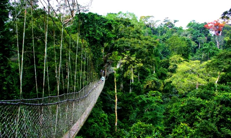 3 days Nyungwe forest National park safari