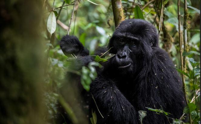5 Days Gorillas and Wildlife Safari from Kigali