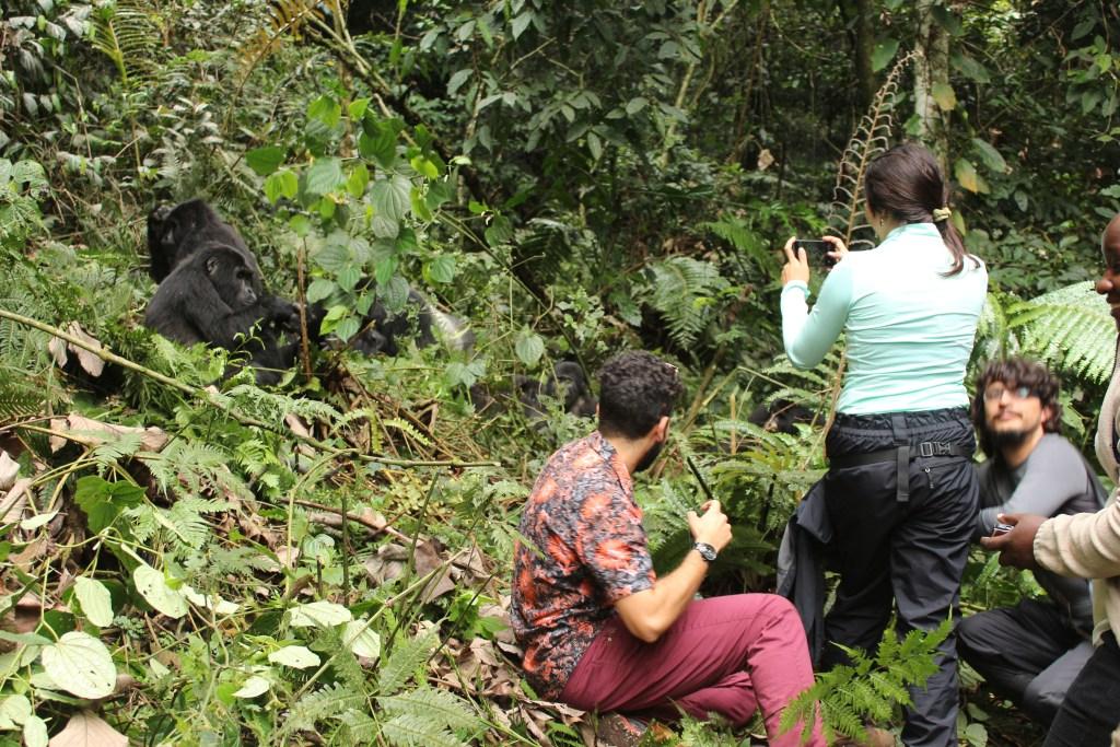 Gorilla Trekking Safety in Rwanda