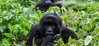 10 Days Best of Rwanda and DRCongo tour