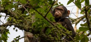 2 Days Nyungwe Chimpanzee & Canopy Walk Safari