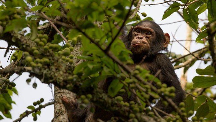 2 Days Nyungwe Chimpanzee & Canopy Walk Safari