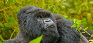 7 Days Rwanda Gorilla Trekking & Wildlife Safari