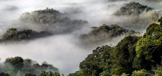 African Parks commits to long term protection of Nyungwe National park