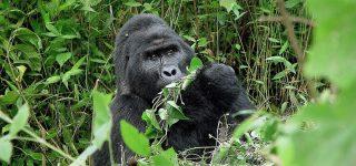 5 Days Bwindi Gorillas & Queen Elizabeth Wildlife Safari