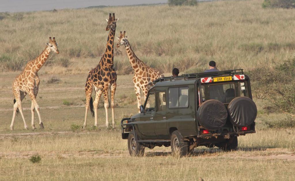Wildlife Game Drives in Uganda.