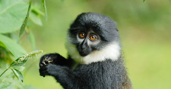 4 Days Nyungwe Primates & Hiking Safari