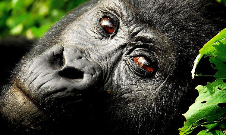2 Days Mgahinga Gorilla Trekking Safari from Kigali