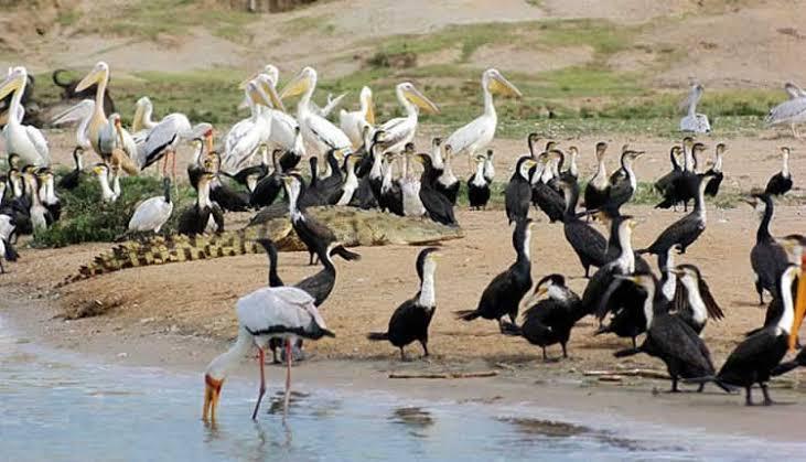 8 Days Uganda Birding & Wildlife Safari