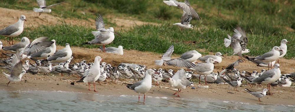 Top 10 Birding Destinations in Uganda
